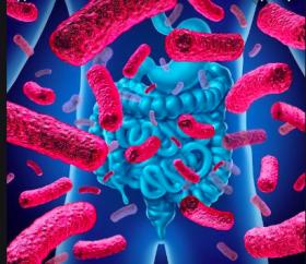 lemicrobiote2_capture-décran-2019-07-12-à-17.34.03.png